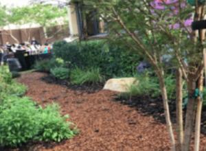 GTI - Omni Middle School Garden