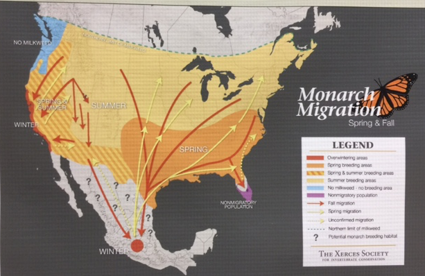 gti - monarch