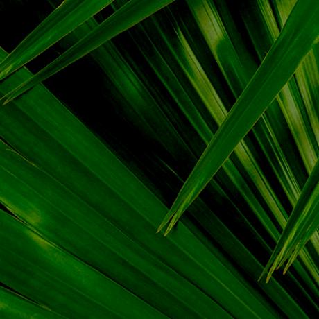 GTI - Palm Banner Standard